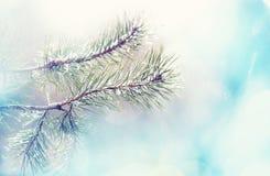 Árbol congelado Imagenes de archivo