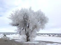 Árbol congelado con nieve en la tierra Imagen de archivo libre de regalías