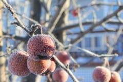 Árbol congelado de Crabapples Fotografía de archivo
