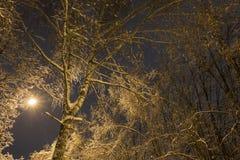Árbol congelado durante la lluvia del hielo Foto de archivo