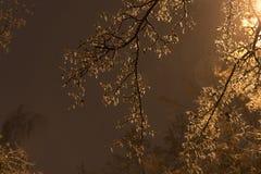 Árbol congelado durante la lluvia del hielo Imagen de archivo