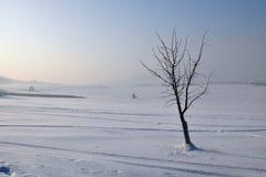Árbol congelado en campo fotos de archivo libres de regalías