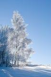 Árbol congelado en invierno Imagen de archivo libre de regalías