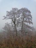 Árbol congelado en paisaje del invierno fotos de archivo