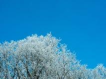 Árbol congelado en un día soleado en invierno Foto de archivo