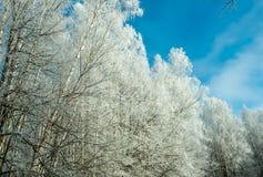 Árbol congelado en un día soleado en invierno Fotografía de archivo