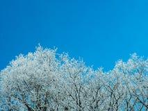 Árbol congelado en un día soleado en invierno Foto de archivo libre de regalías