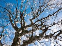 Árbol congelado sobre el cielo azul Imagen de archivo