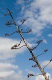 Árbol contra el cielo   Foto de archivo