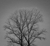Árbol contra el cielo Fotos de archivo