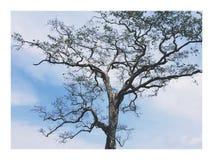 Árbol contra el cielo Fotos de archivo libres de regalías