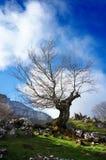Árbol contra el cielo azul imagen de archivo