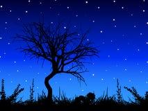 Árbol contra el cielo estrellado Fotos de archivo