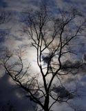 Árbol contra el cielo que precede una tormenta Fotos de archivo