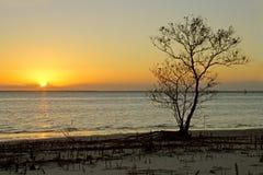 Árbol contra puesta del sol Fotos de archivo