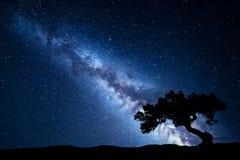 Árbol contra vía láctea Paisaje de la noche fotos de archivo
