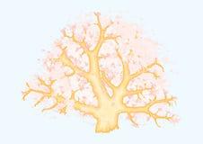 Árbol coralino libre illustration