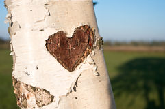 Árbol, corazón, amor Fotos de archivo