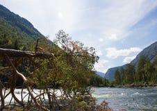 Árbol, corriente de la montaña y montañas caidos Fotos de archivo libres de regalías