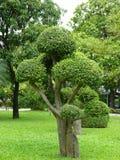 Árbol cortado Fotografía de archivo