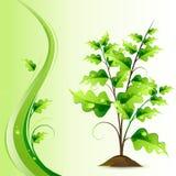 Árbol creciente Imágenes de archivo libres de regalías