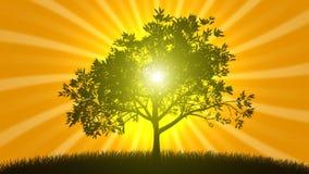 Árbol creciente con salida del sol ilustración del vector