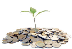 Árbol creciente del dinero Fotografía de archivo