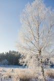 Árbol cubierto con nieve Imágenes de archivo libres de regalías