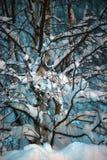 Árbol cubierto con nieve en la oscuridad Imagen de archivo libre de regalías