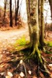 Árbol cubierto de musgo Foto de archivo libre de regalías