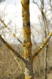 Árbol cubierto de musgo Imagen de archivo libre de regalías