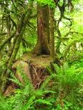 Árbol cubierto de musgo en helechos del bosque Foto de archivo libre de regalías