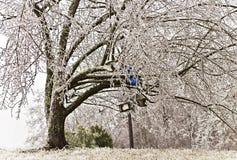 Árbol cubierto en hielo a partir de la tormenta de hielo el 09 Imagen de archivo libre de regalías
