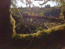 Árbol cubierto en musgo Fotos de archivo libres de regalías