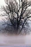 Árbol cubierto en niebla Imágenes de archivo libres de regalías