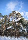 Árbol cubierto en nieve Imagen de archivo