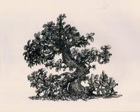 Árbol curvado dinero Imágenes de archivo libres de regalías