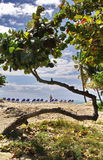 Árbol curvado en la isla imagen de archivo libre de regalías
