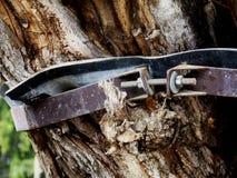 Árbol dañado, que parte viejo protegido con el cuello de acero imágenes de archivo libres de regalías