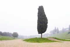Árbol de álamo en Roma foto de archivo libre de regalías