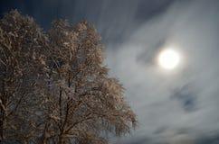 Árbol de abedul alto nevado con el fondo del cielo de la Luna Llena y de la estrella Fotos de archivo