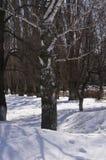 Árbol de abedul blanco en un parque nevado en un día soleado Imagenes de archivo
