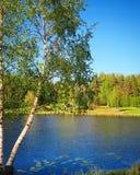 Árbol de abedul blanco por el agua Imágenes de archivo libres de regalías