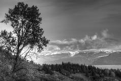 Árbol de abedul cerca de la bahía en blanco y negro Fotos de archivo libres de regalías