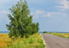 Árbol de abedul cerca del camino vacío rural Imágenes de archivo libres de regalías