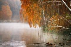 Árbol de abedul cerca del río en una mañana brumosa Imagen de archivo libre de regalías