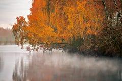 Árbol de abedul cerca del río en una mañana brumosa Imagenes de archivo