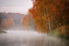 Árbol de abedul cerca del río en una mañana brumosa Fotografía de archivo libre de regalías