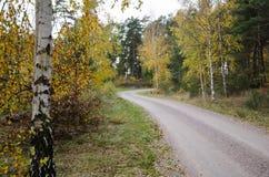 Árbol de abedul colorido por el borde de la carretera Fotografía de archivo libre de regalías