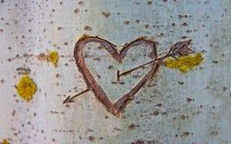 Árbol de abedul con el corazón tallado fotos de archivo